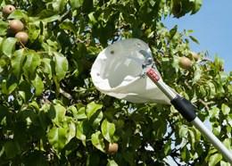 Professional telescopic fruit picker