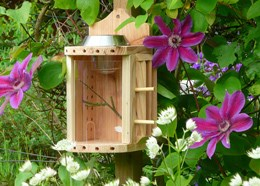 Solar insect theatre