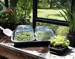 Propagation grow kit with plant labels