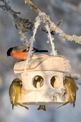 Woodland bird feeder