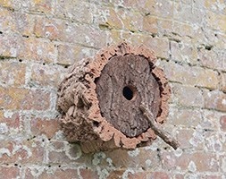 Cork bird box