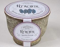 Blue hyacinth rustic bulb kit