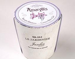 Pink amaryllis bulb kit