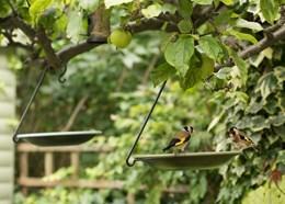 Hanging bird bowl