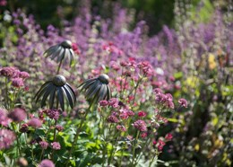 Echinacea plant stake