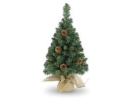 Parkerview pine tree