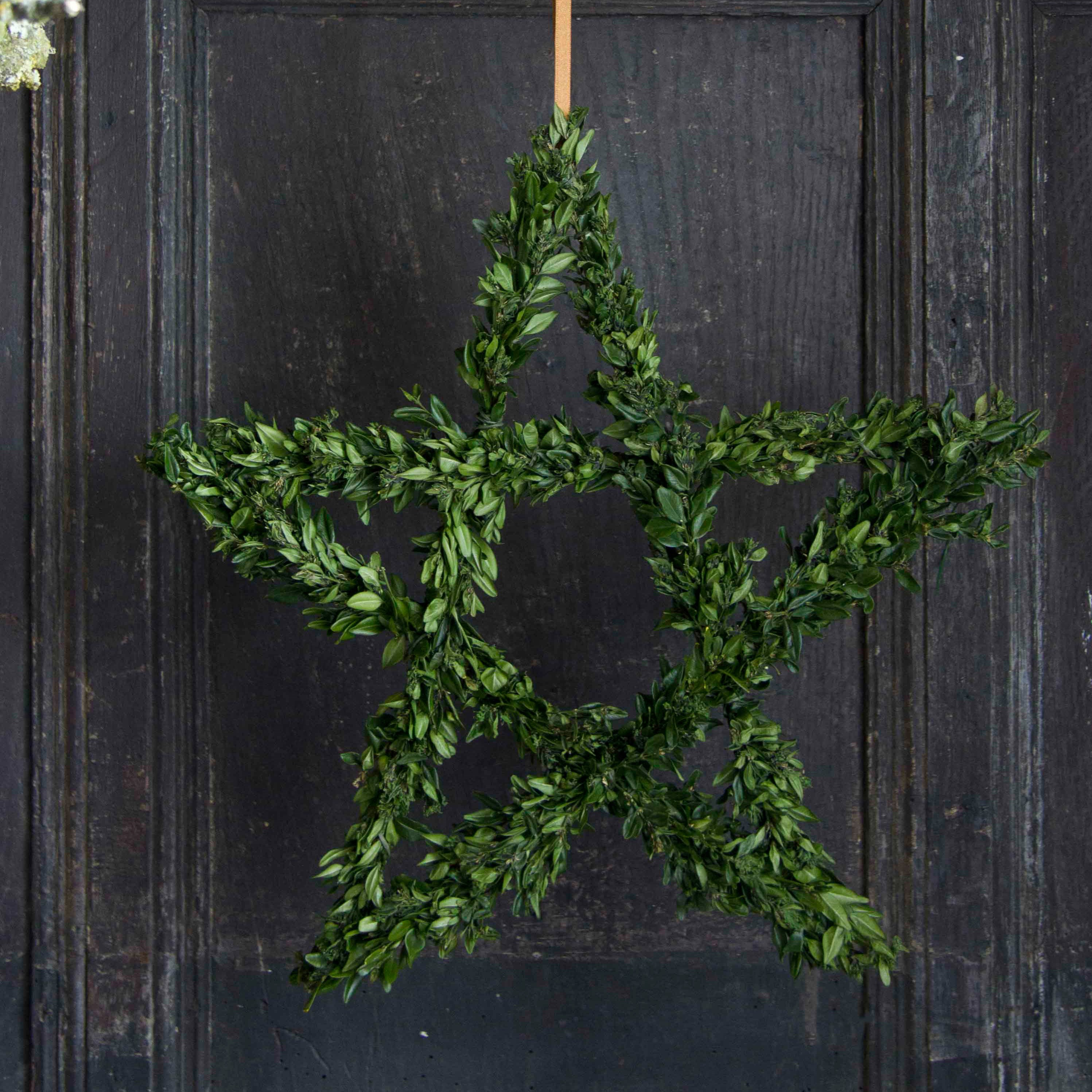 Buxus star
