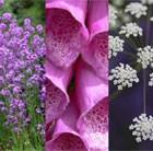 Attracting Wildlife Seed Combination