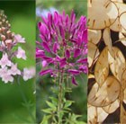 Self-seeding Seed Combination