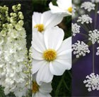 White Flowering Seed Combination