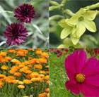 Vibrant Colour Seed Combination