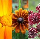 Hot Border Seed Combination