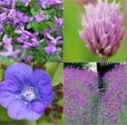 Edible Flowers Plant Combination