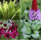 Damp Shade Plant Combination