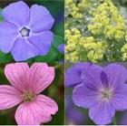 Steep Slope Plant Combination