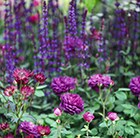 Add some Oomph 'Plant Combination'