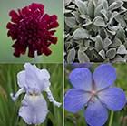 Drought Tolerant ' Plant Combination'
