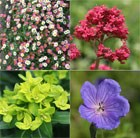 Low Maintence 'Plant Combination'
