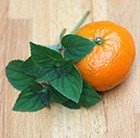 Salvia elegans 'Tangerine'' - tangerine sage / Salvia elegans Tangerine'